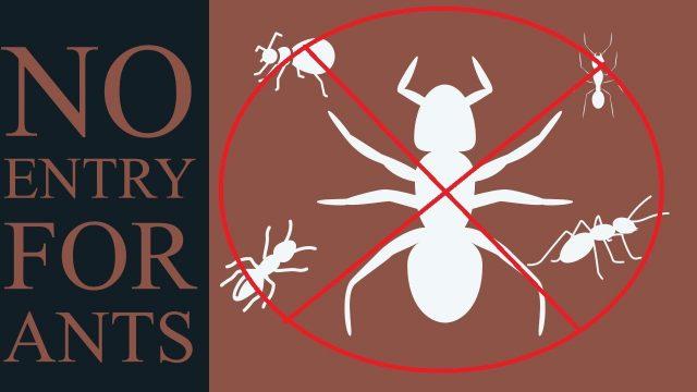 ഉറുമ്പിനെ അകറ്റാനൊരു സൂത്രപ്പണി  – get rid of ants from home vegetable garden