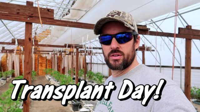 Tomato Transplant Day! | Hydroponic Tomato Growing | Wishwell Farms vlog 5