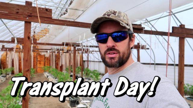 Tomato Transplant Day! | Hydroponic Tomato Growing | Wishwell Farms vlog 5