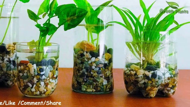 How to Make Indoor Water Garden From Recycled Materials | indoor hydroponic gardening//GREEN PLANTS