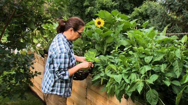 Mayo Clinic Minute: Benefits of tending a garden
