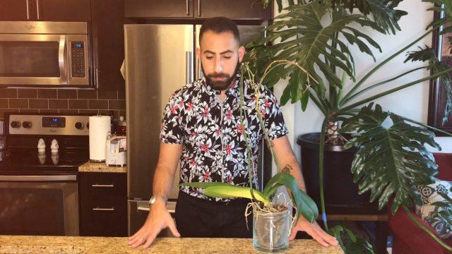 Converting Your Orchid: Semi-Hydroponics