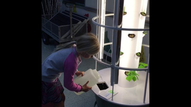 Hydroponic Tower Care