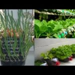 80 Beautiful Garden ideas Using Old Plastic Bottles