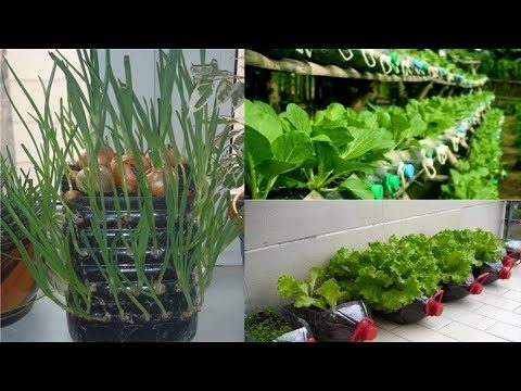 80 Beautiful Garden ideas Using Old Plastic Bottles