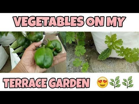 My Vegetable Garden/Garden Overview 