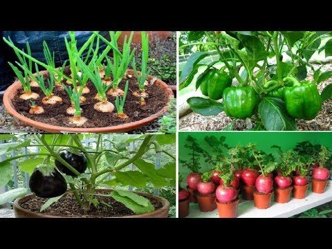 Top 10 easy to grow vegetables for beginners