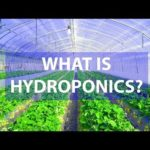 What Is Hydroponics: Amazing Advantages Over Soil-Based Agriculture