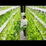 UrbanKisaan.com | Hydroponic Farming in India