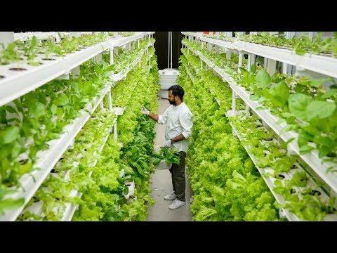 UrbanKisaan.com   Hydroponic Farming in India