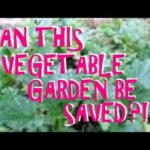 SUBURBAN HOMESTEAD VEGETABLE GARDEN UPDATE ~ HELP THIS DUMPSTER DIVER ~ CAN THIS GARDEN BE SAVED?!