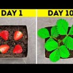 31 MUST-KNOW HACKS FOR YOUR GARDEN