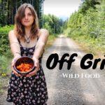 OFF GRID GARDEN TOUR –  4 Month Update & Harvest  | Picking Wild Berries Ep.36