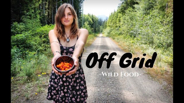 OFF GRID GARDEN TOUR –  4 Month Update & Harvest  | Picking Wild Berries Ep.36