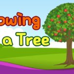 Kids vocabulary – Growing a Tree – Learn English for kids – English educational video