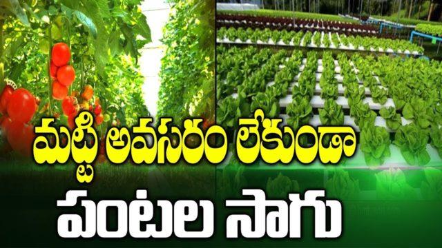 హైడ్రోపోనిక్ సాగు పద్ధతి | Hydroponic Farming | hmtv Agri