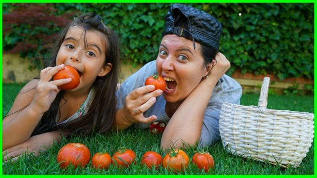 Özlem and Rüya Picking Up Tomato From The Garden – Funny Kids Video