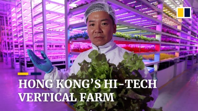Inside Hong Kong's hi-tech vertical farm of the future