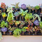 Vertical Succulent Garden – Watex Expandable Green Wall