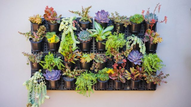 Vertical Succulent Garden – Watex Expandable Green Wall