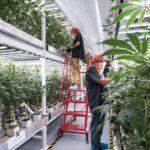 Vertical Farming in the USA. Circular & BB Business