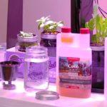 The Passive Hydroponic Method | Start your Indoor Garden
