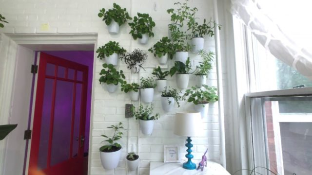 Best Indoor Wall Planters