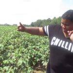 The Black Farmers In America –  A Black Female Farm History & Story  How we got paid 2