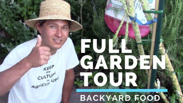 Full July Vegetable Garden Tour – Food I Grow in My Backyard in Summer