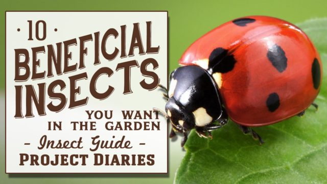 ★ 10 Beneficial Insects You Want in the Garden (Insect Guide)
