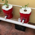 How I Built My DWC System – Recirculating Deep Water Culture – Hydroponic Peppers & Tomatoes EASY
