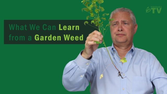 What We Can Learn From a Garden Weed [4 Lessons]