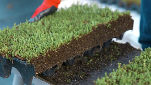 How To Install a Modular Green Roof