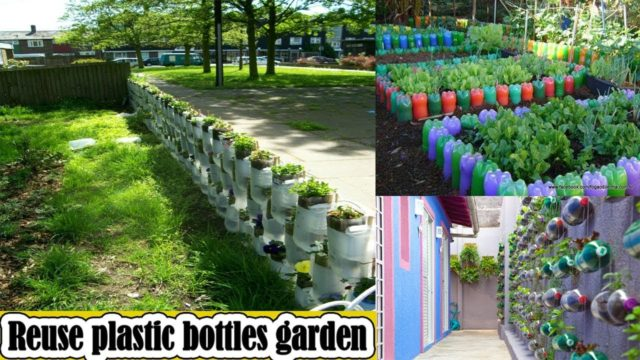 Brilliant ways to reuse plastic bottles garden