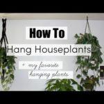 How To Hang Houseplants!   BEST Hanging Indoor Plants!
