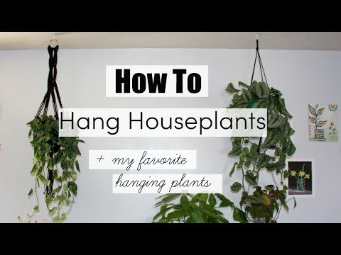 How To Hang Houseplants! | BEST Hanging Indoor Plants!