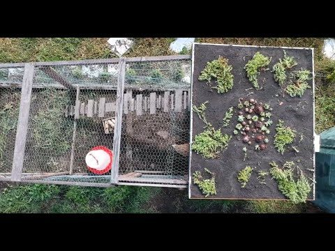 How to build Cheap Green Roof –  Experiment 12.5.2019