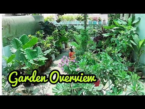 Sunday Update Garden overview 12/5/19