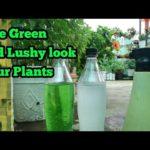 Monsoon K liye Foliar spray Fertilizers, Give Green Lushy look With lots Of Flowers