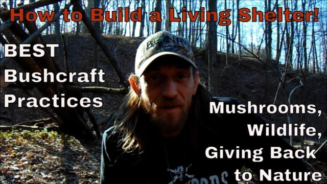 Morel Mushrooms, #Bushcraft Shelter With Living Walls and MORE!