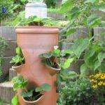 Pflanzen im PVC Rohr . Vertikale Garten . Erdbeeren .