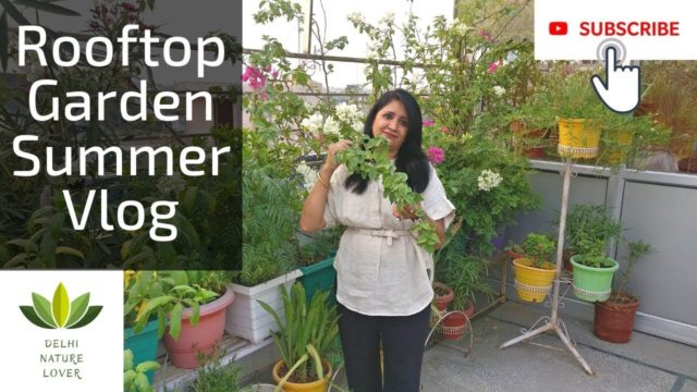 Rooftop Garden – Summer Vlog  || Summer Garden Care | ग्रीष्म ऋतु गार्डन की देखभाल