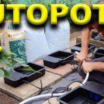 Indoor Hydroponic System – Autopot XL – Chilli Plant