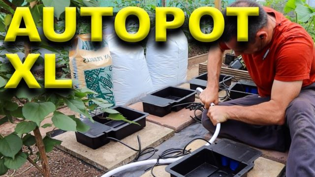 Indoor Hydroponic System – Autopot XL – Chilli Plant
