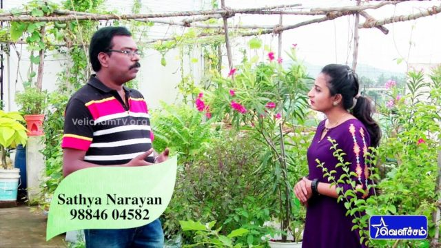 En Veetu Thottathil |Terrace-and-Roof Gardening | Sathya Narayan – Terrace Gardening | Video