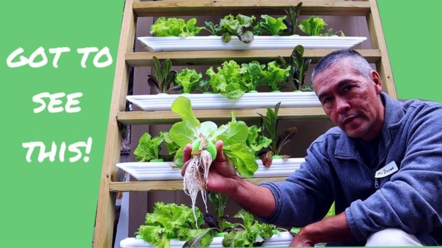 Grow Plants at Home / Updates and Tips / DIY Hydroponics