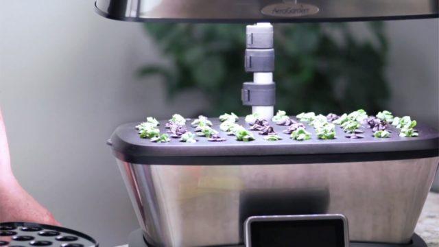 Why Start Seeds Early – AeroGarden Indoor Gardening Month