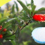 Epsom Salt Use in Gardening Plants || Benefits in Gardening, Plants and Soil || Organic gardening