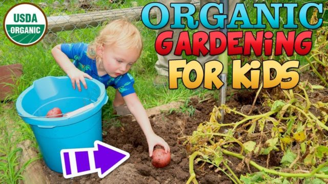Learn to Harvest Vegetables and Garden for Kids Fun