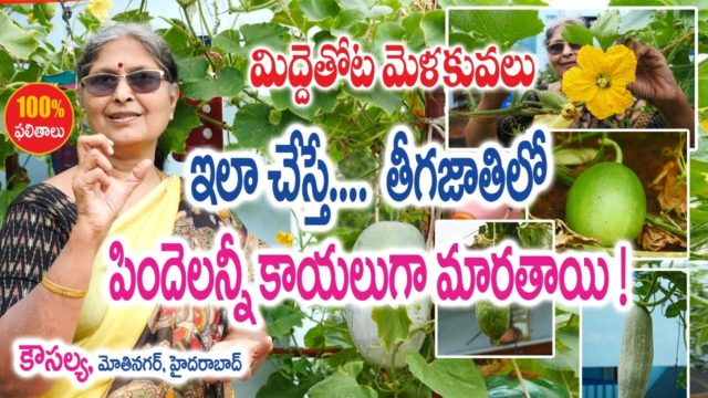 Terrace Garden – Pollination – Better Yields || Kousalya – Motinagar – Hyderabad || Rytunestham